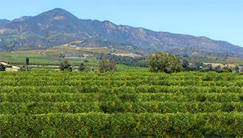 Santa Paula CA